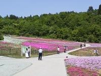 5月27日 堀之内 芝桜まつり
